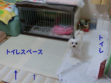 b0193480_1564742.jpg