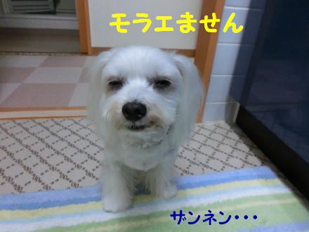 b0193480_1573248.jpg