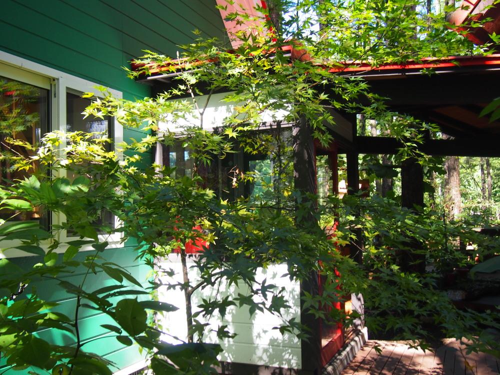 10月はじめ、秋晴れ、カンタベリーの庭の様子です。_f0276498_22111744.jpg