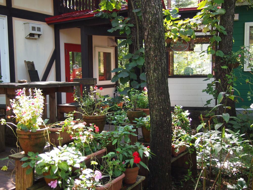 10月はじめ、秋晴れ、カンタベリーの庭の様子です。_f0276498_22121364.jpg