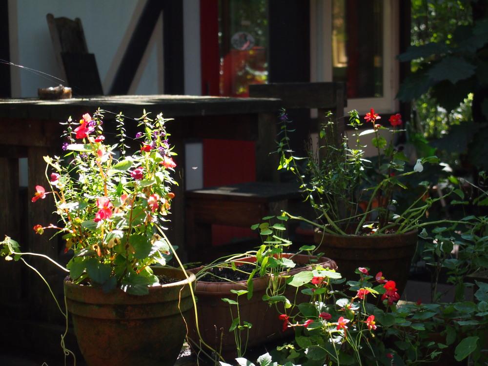 10月はじめ、秋晴れ、カンタベリーの庭の様子です。_f0276498_22124721.jpg