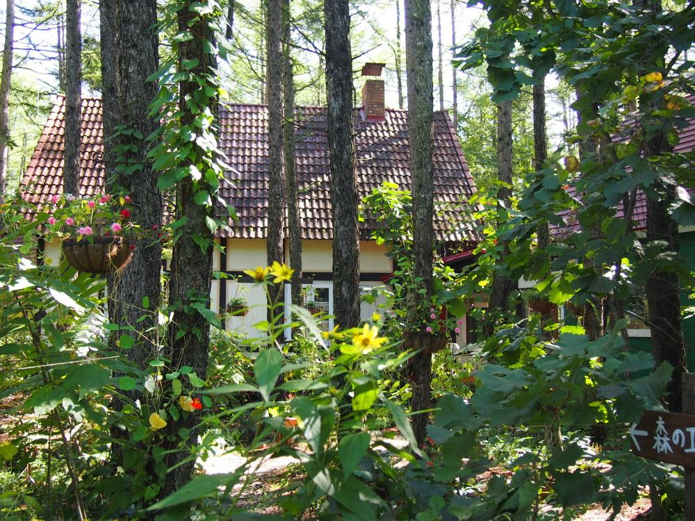10月はじめ、秋晴れ、カンタベリーの庭の様子です。_f0276498_22151213.jpg