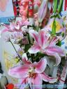 花の子ヒデヒデ_b0308556_1851893.jpg