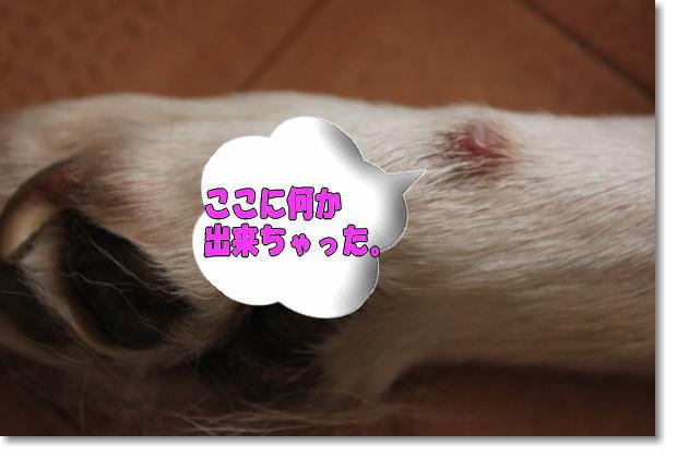 b0136683_1165211.jpg