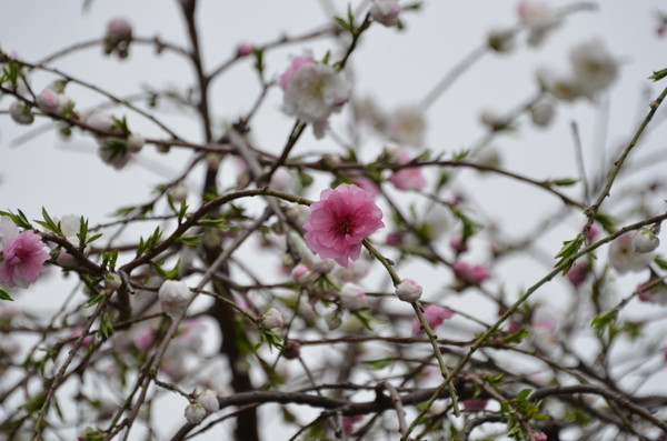 花の名前_b0304411_1053793.jpg