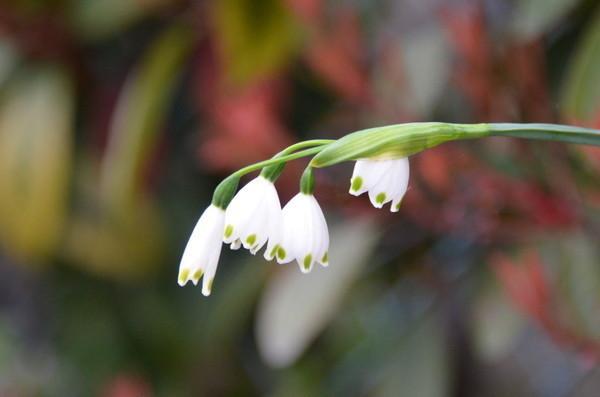 花の名前_b0304411_1053796.jpg