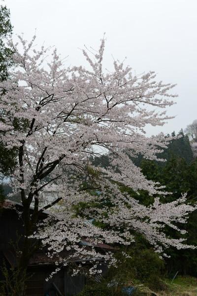 妙義神社_b0304411_1053821.jpg