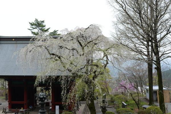 妙義神社 その2_b0304411_1053911.jpg