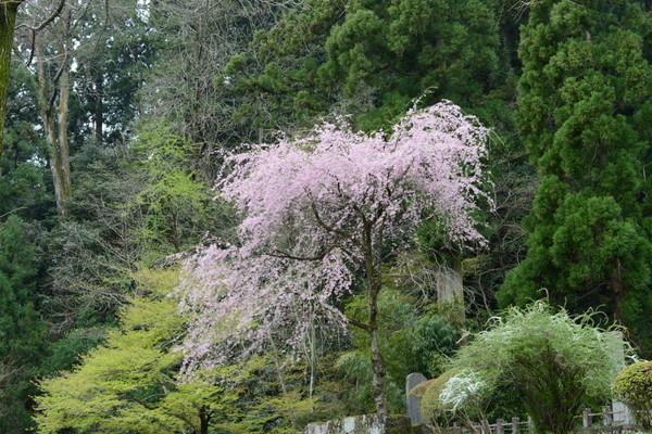 妙義神社 その2_b0304411_1053935.jpg