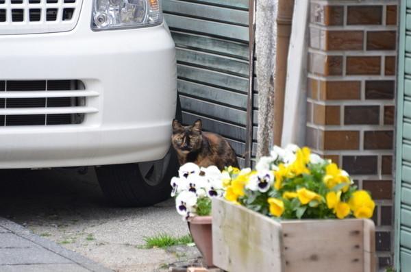 にゃんこにゃんこ その474 富岡の猫_b0304411_105421.jpg