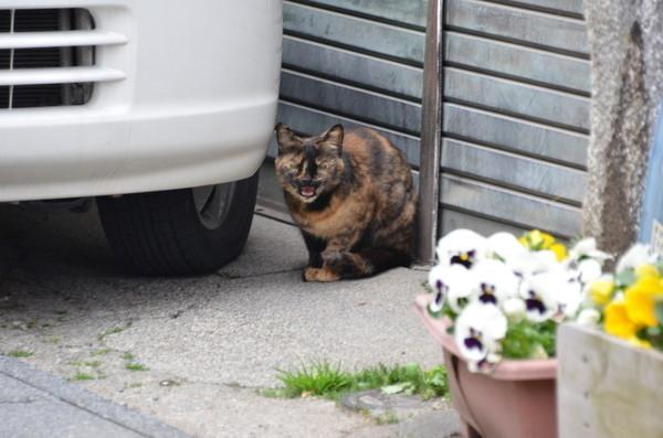 にゃんこにゃんこ その474 富岡の猫_b0304411_1054222.jpg