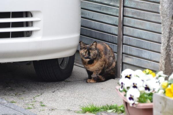 にゃんこにゃんこ その474 富岡の猫_b0304411_1054226.jpg