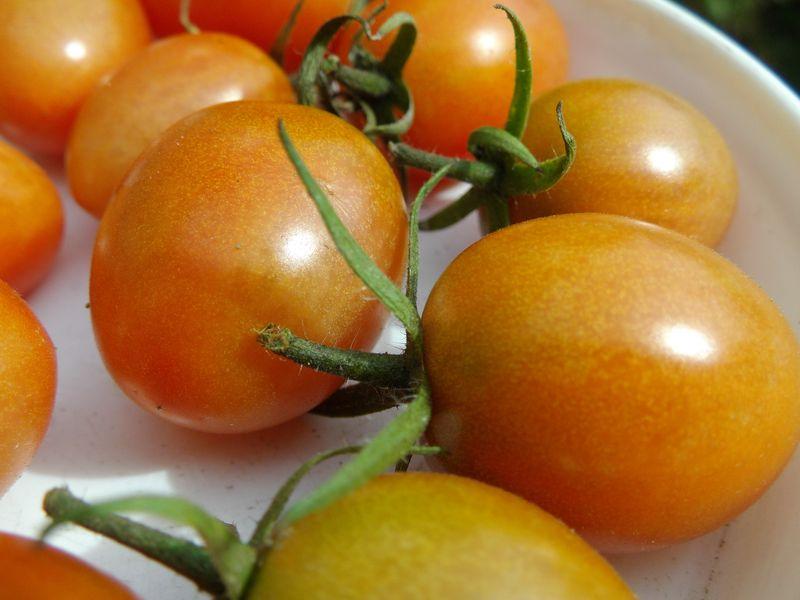 オレンジ色の秋_c0025115_205145100.jpg