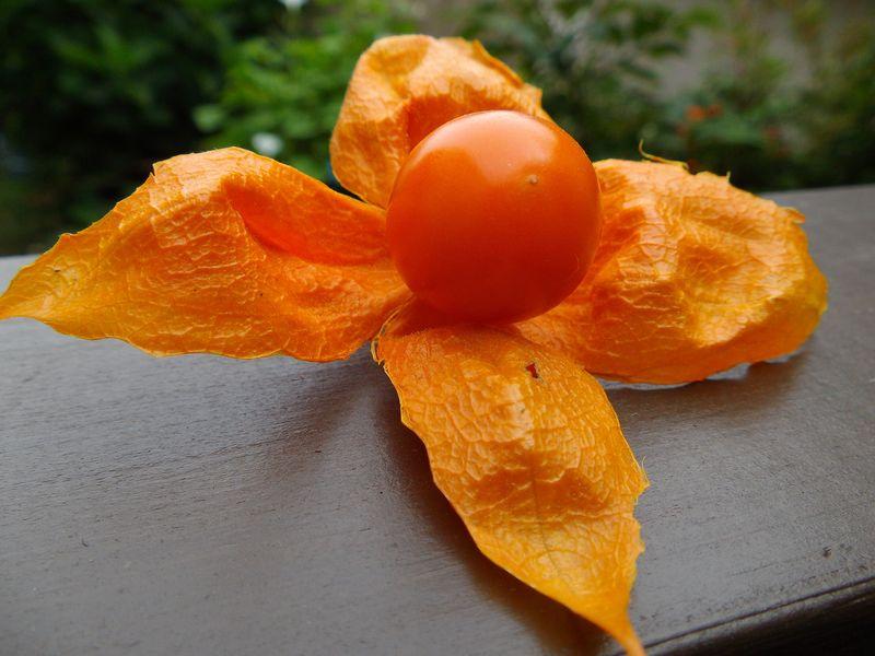 オレンジ色の秋_c0025115_20515527.jpg