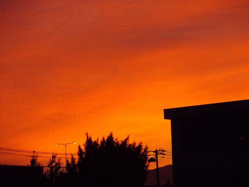 オレンジ色の秋_c0025115_2052184.jpg