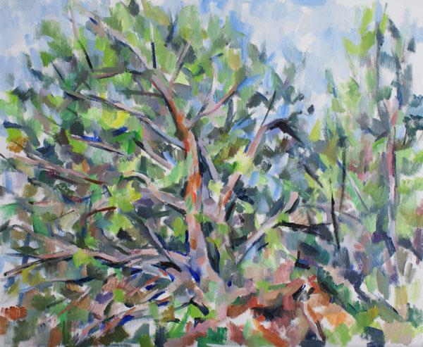 松の木と根(習作)_c0236929_20282757.jpg