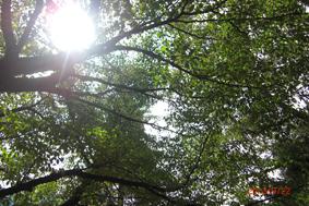 『第12回 ふるさと岡山の森を訪ねる旅』 後編レポート_b0211845_20203558.jpg