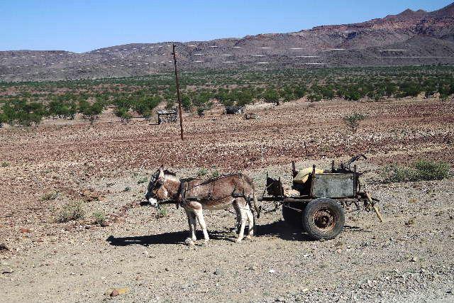 ナミビアの旅(30) カオコランドのオプウォ・カントリーロッジへ _c0011649_2132484.jpg