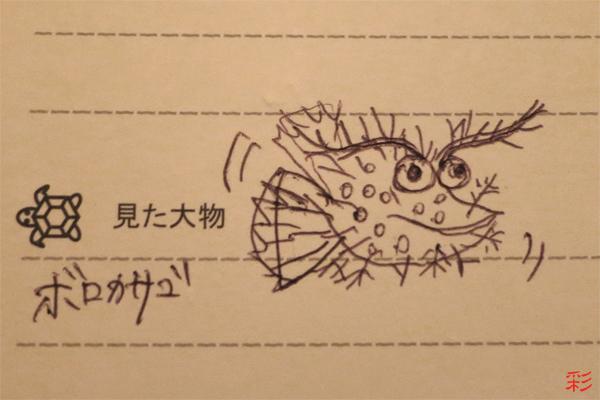 季節はずれのウミウシT☆みなべ・田辺_e0158261_5213287.jpg