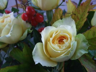 オークリーフ(秋バラと実もののアレンジメントⅠ)_f0049672_11515668.jpg
