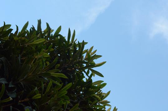 ビワの樹のものがたり_b0194880_114854.jpg
