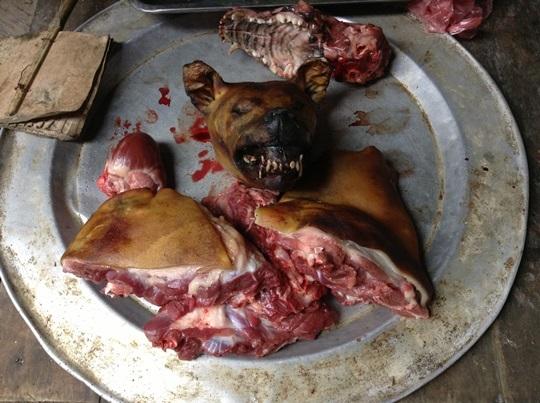 猫が人間の食事を盗み食いして困っています -よろ …
