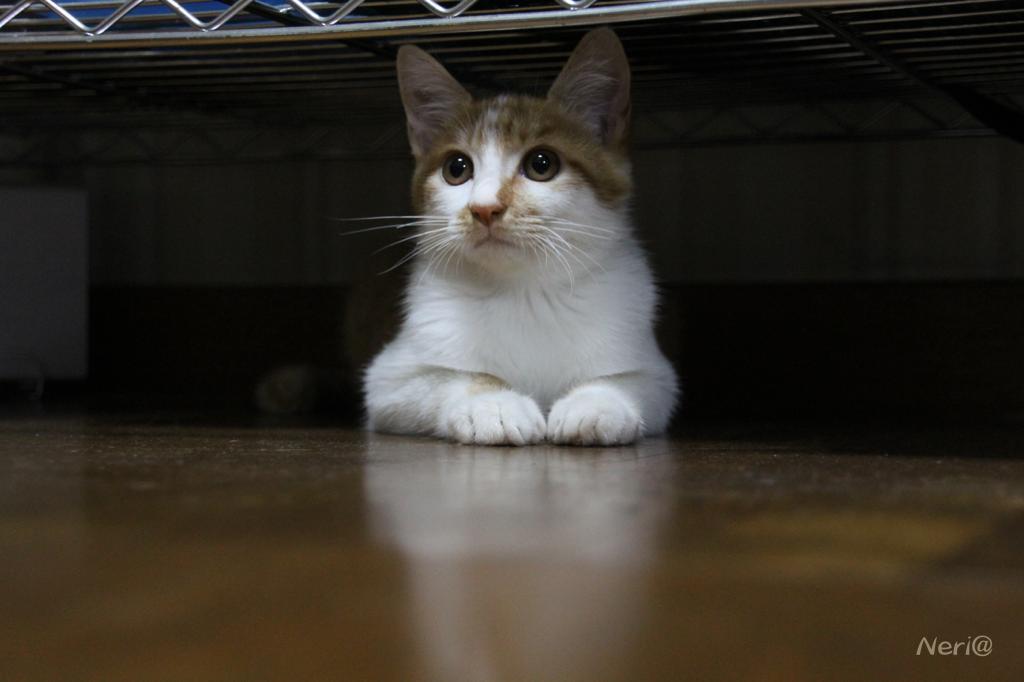 【猫】誰かいないかな〜_f0141609_20411283.jpg
