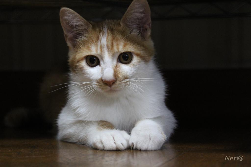 【猫】誰かいないかな〜_f0141609_20411488.jpg