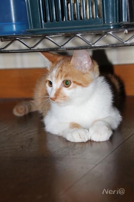 【猫】誰かいないかな〜_f0141609_2041425.jpg