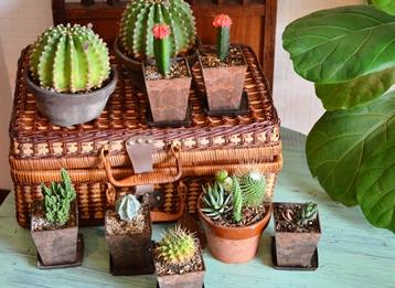 新しい緑・植物たち_d0263815_1532934.jpg