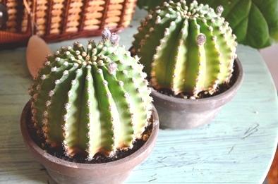 新しい緑・植物たち_d0263815_15385315.jpg