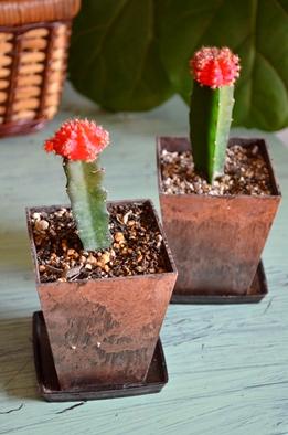 新しい緑・植物たち_d0263815_1550437.jpg