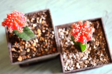 新しい緑・植物たち_d0263815_15541331.jpg