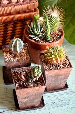 新しい緑・植物たち_d0263815_15554276.jpg
