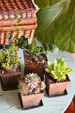 新しい緑・植物たち_d0263815_15583975.jpg