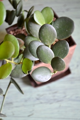 新しい緑・植物たち_d0263815_1602820.jpg