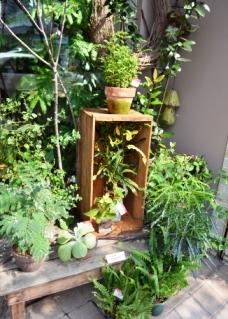新しい緑・植物たち_d0263815_16145169.jpg