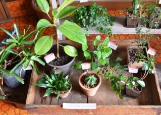 新しい緑・植物たち_d0263815_1615965.jpg