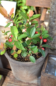 新しい緑・植物たち_d0263815_1632361.jpg