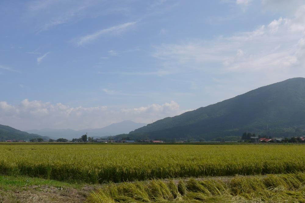 「おろく」が見守る収穫作業_d0001843_22321333.jpg