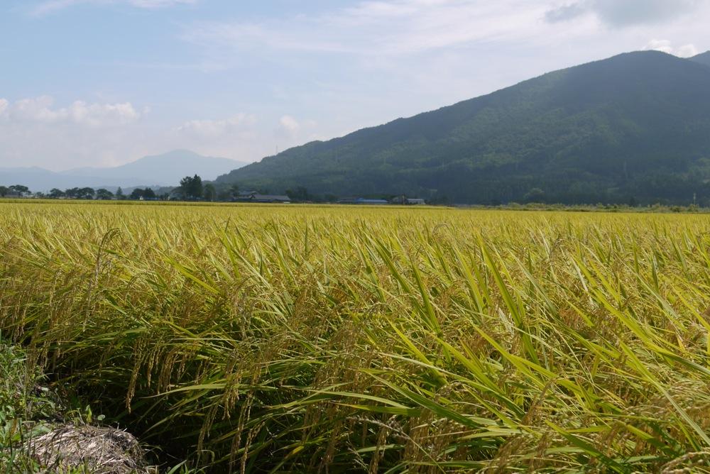 「おろく」が見守る収穫作業_d0001843_22333511.jpg