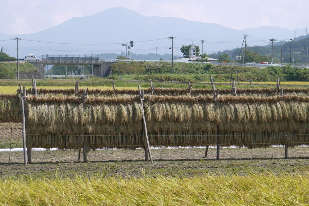 「おろく」が見守る収穫作業_d0001843_22335169.jpg