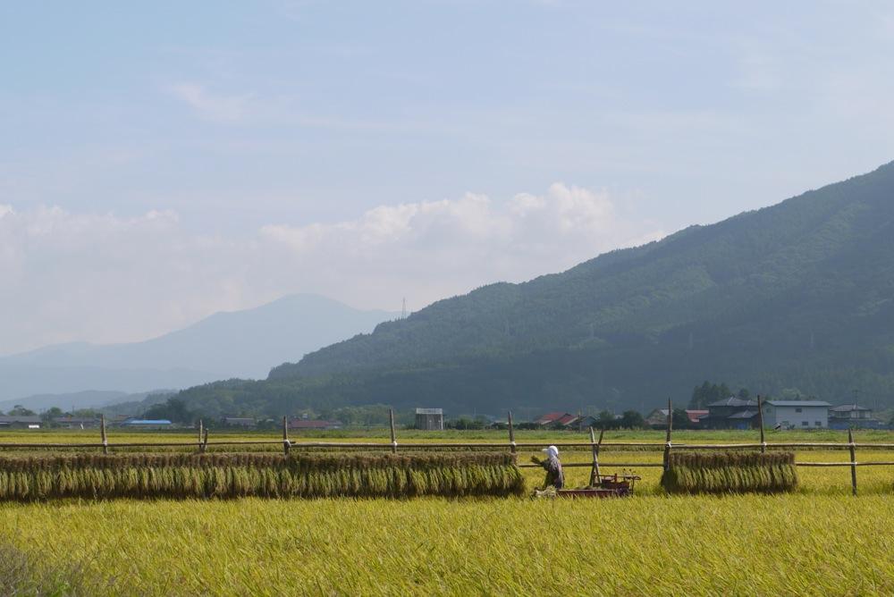 「おろく」が見守る収穫作業_d0001843_2233727.jpg