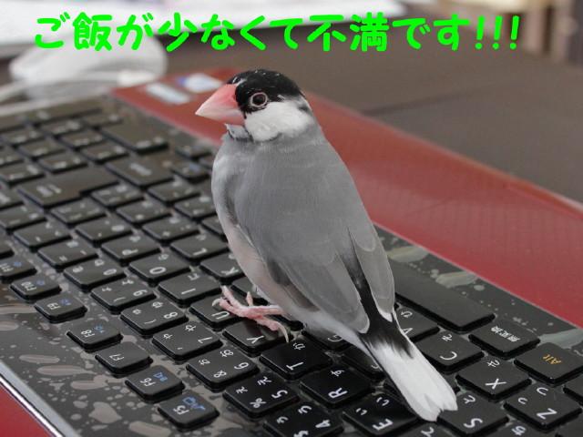 b0158061_22511567.jpg