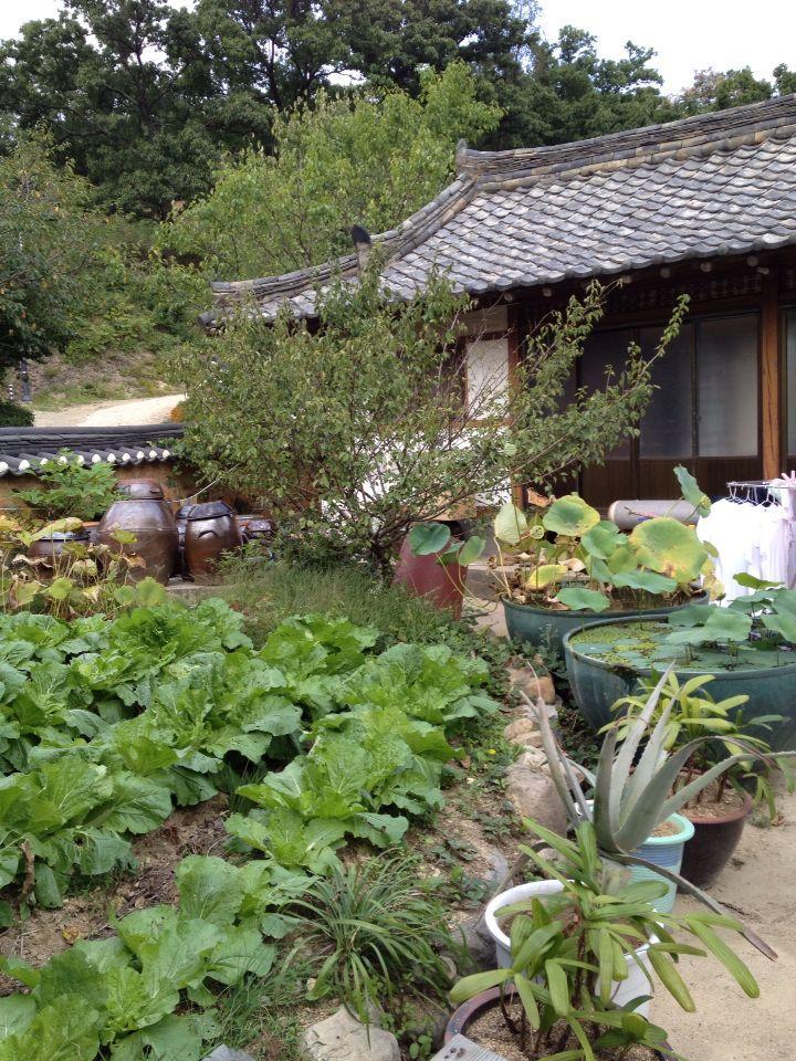 韓国のシェルティブリーダー、ジョンさん宅にお邪魔しました_f0126965_2155563.jpg