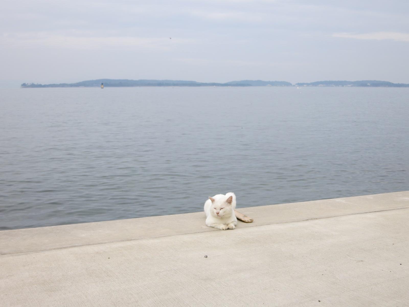 日間賀島3_e0233674_2024172.jpg