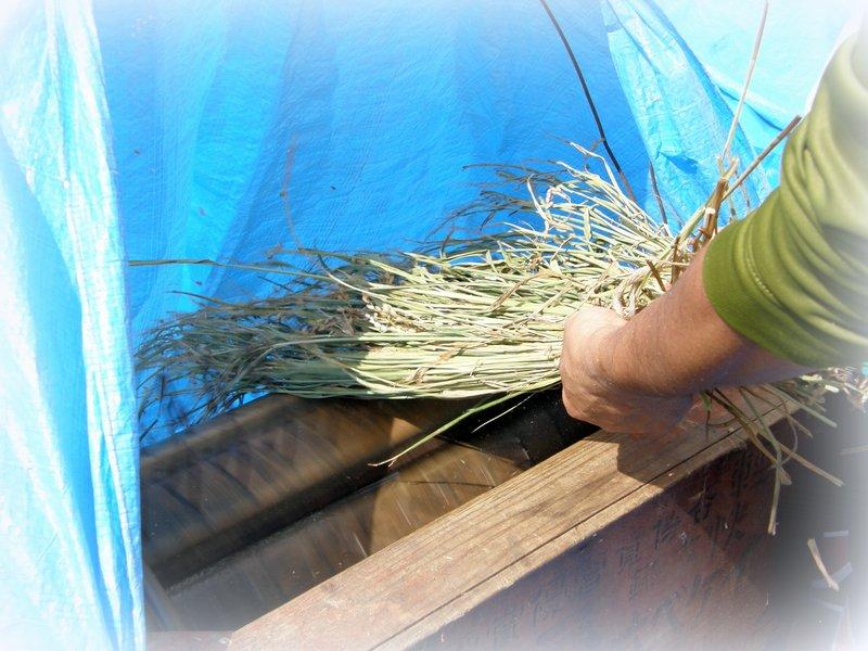 脱穀~~~籾すり~~~_c0057390_22532750.jpg
