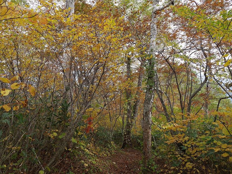 10月5日、羊蹄山を喜茂別コースから_f0138096_1281386.jpg