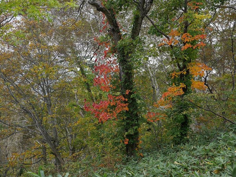 10月5日、羊蹄山を喜茂別コースから_f0138096_128486.jpg
