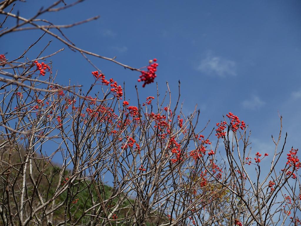 10月5日、羊蹄山を喜茂別コースから_f0138096_1293682.jpg